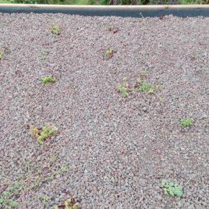 la toiture végétale